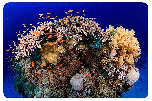 adrian-schoene-koralle