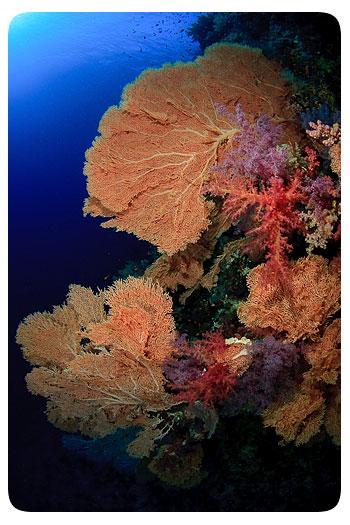 adrian-schoene-korallengarten