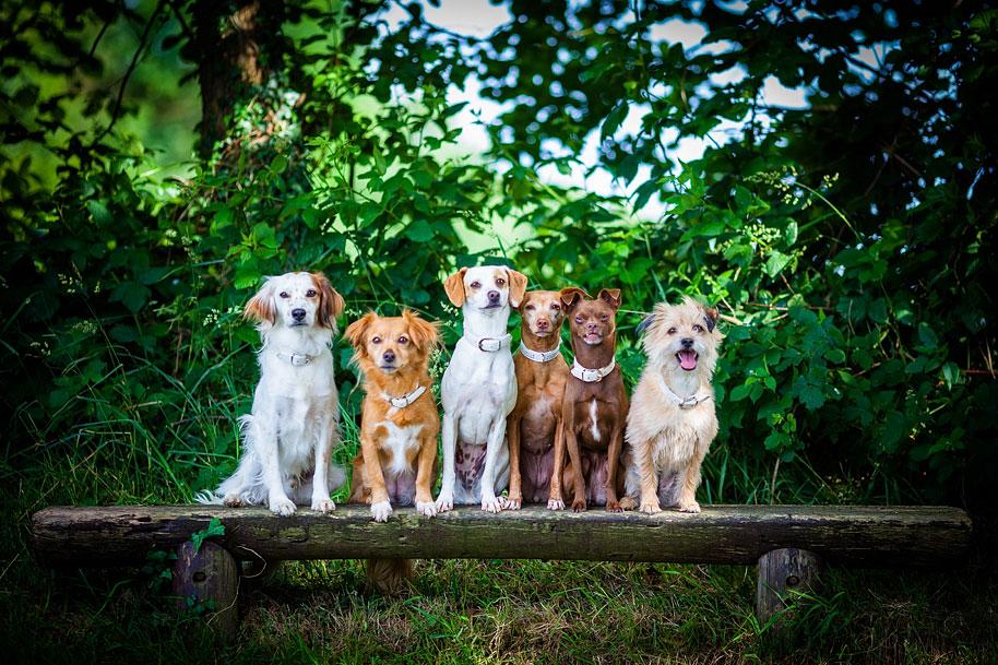 kiel-hundefotos